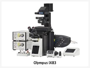 """전자동 도립현미경,Deck 시스템 도입으로 뛰어난 확장성,장시간의 이미징 촬영에도 최적의 안정성제공,최상의 광학성능 제공,터치패널과 소프트웨어를 통한 완벽제어가능,사용자의 편의를 위한 인체공학 디자인,IX83 전자동화된 현미경은 수많은 연구자들의 요구를 만족시킬 수 있게 설계되었습니다.2개의 Deck""""구조를 채용 다양한 이미지기술에 필요한 여러 장치들을 장착 할 수 있게 되었습니다. 또한 오랜 시간 동안 세포관찰에 용이 할 수 있도록 높은 내구성과 안정성을 가지고 있어 장비의 활용성을 극대화 시킬 수 있습니다."""